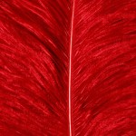 Feathers -  Free-Textures-Animal-World- (11)