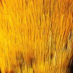 Feathers -  Free-Textures-Animal-World- (13)