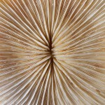 Feathers -  Free-Textures-Animal-World- (14)