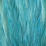 Feathers - Free-Textures-Animal-World- (2)