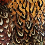 Feathers - Free-Textures-Animal-World- (3)