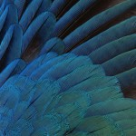Feathers - Free-Textures-Animal-World- (4)