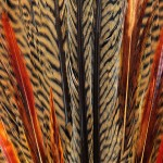 Feathers - Free-Textures-Animal-World- (6)
