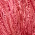 Feathers -  Free-Textures-Animal-World- (9)