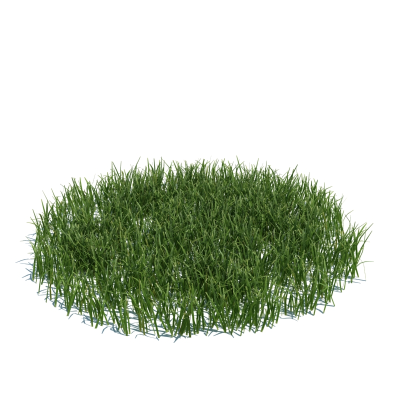 105_simple_grass_large_v3